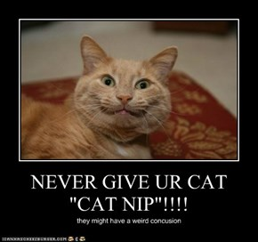 "NEVER GIVE UR CAT ""CAT NIP""!!!!"
