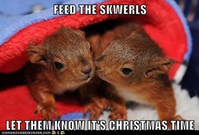 FEED THE SKWERLS  LET THEM KNOW IT'S CHRISTMAS TIME