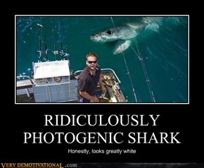 RIDICULOUSLY PHOTOGENIC SHARK
