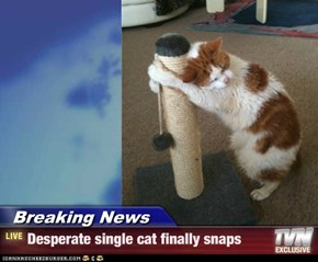 Breaking News - Desperate single cat finally snaps