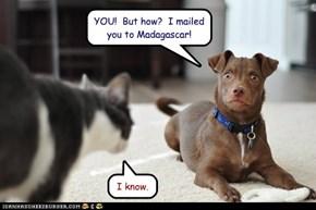 YOU!  But how?  I mailed you to Madagascar!