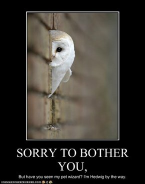 SORRY TO BOTHER YOU,