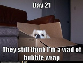 Day 21  They still think I'm a wad of bubble wrap