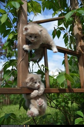 Cyoot Kittehs of teh Day: A Wild Outdoor Adventure
