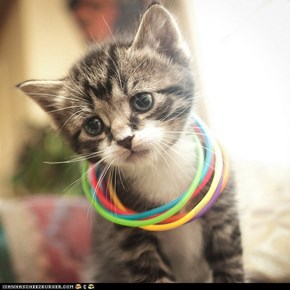 Cyoot Kitteh of teh Day: But I Don't Like Raves!