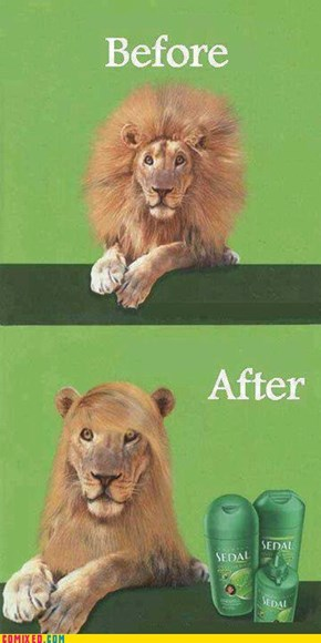 Before and after of a lion