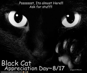 Happy Black Cat day!!