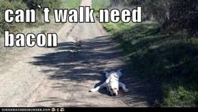 can`t walk need bacon