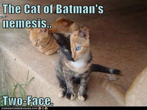 The Cat of Batman's nemesis..  Two-Face.