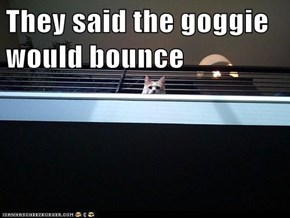 They said the goggie would bounce