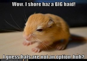 Wow. I shore haz a BIG haid!  I guess hats are not an option, huh?