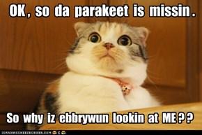 OK ,  so  da  parakeet  is  missin .