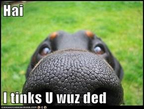 Hai  I tinks U wuz ded
