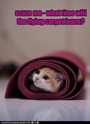 scuze me - what time will the flying carpet leave?