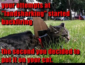 "your attempts at ""landsharking"" started backfiring  the second you decided to put it on your cat."