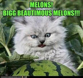 MELONS!  BIGG BEAUTIMOUS MELONS!!!