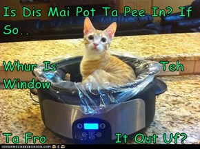 Is Dis Mai Pot Ta Pee In? If So.. Whur Is                  Teh Window Ta Fro            It Out Uf?