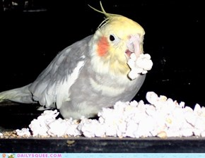 Reader Squee: Popcorn!