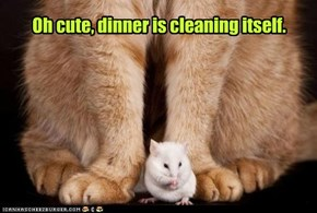 Oh cute, dinner is cleaning itself.