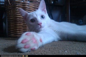 More Jellybean Toes