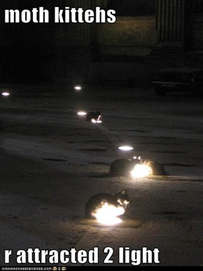 moth kittehs  r attracted 2 light