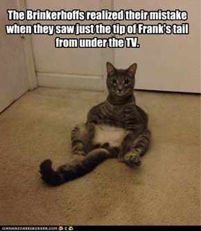 The Brinkerhoffs realized their mistake when they saw just the tip of Frank's tail from under the TV.