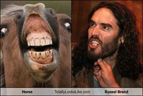 Horse Totally Looks Like Russel Brand