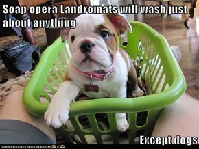 Soap opera Landromats will wash just about anything  Except dogs