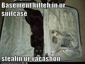 Basement kitteh in ur suitcase  stealin ur vacashon