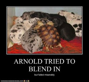 ARNOLD TRIED TO BLEND IN
