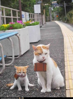 Cyoot Kittehs of teh Day: Adventure, Here We Come!