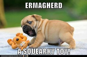 ERMAGHERD  A SQUEARKY TOY!