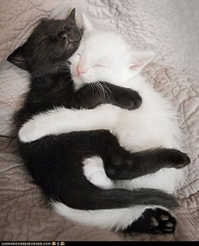 Cyoot Kittehs of teh Day: Yin-Yang Cuddles