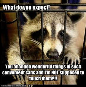 One man's trash is another raccoon's treasure? LOL NO.
