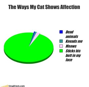 The Ways My Cat Shows Affection