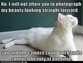 No. I will not allow you to photograph my beauty looking straight forward.   you and the camera could not handle so much beauty at one time.