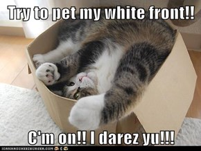 Try to pet my white front!!  C'm on!! I darez yu!!!