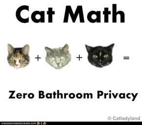 Can't Argue With That Cat Math