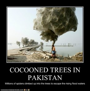 COCOONED TREES IN PAKISTAN