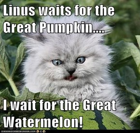 Linus waits for the Great Pumpkin....  I wait for the Great Watermelon!