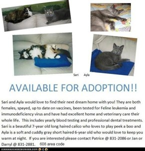 These two cats are in Madison, WI. They need a new home because their current human is dying.