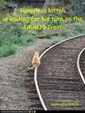 Homeless kitteh is waiting for his turn on the  URRKN Train