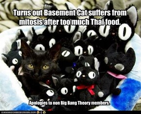 Turns out Basement Cat suffers from mitosis after too much Thai food.