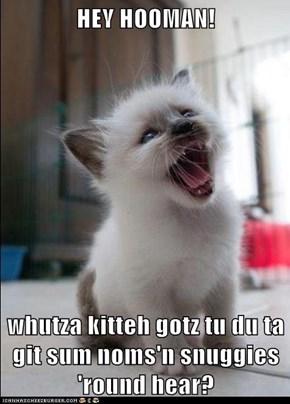 HEY HOOMAN!  whutza kitteh gotz tu du ta git sum noms'n snuggies 'round hear?