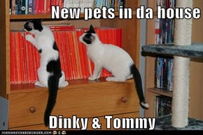 New pets in da house  Dinky & Tommy