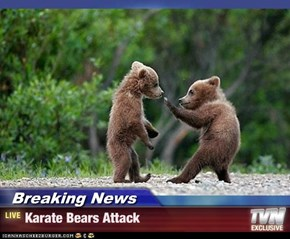 Breaking News - Karate Bears Attack