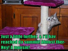 Just a little further, & i'll hav reached da summit! Almost ther- Hey! A mousie!