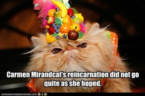 Carmen Mirandcat's reincarnation did not go quite as she hoped.