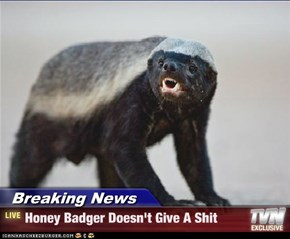 Breaking News - Honey Badger Doesn't Give A Shit