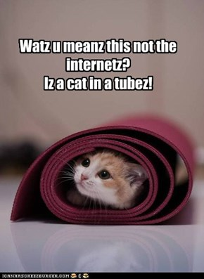 Watz u meanz this not the internetz? Iz a cat in a tubez!